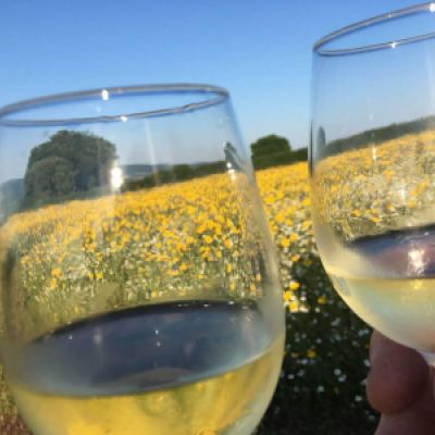 Wine Glasses Field